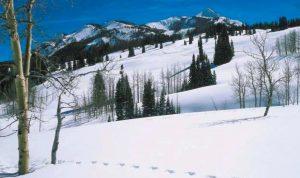 Prospect footprints in snow 2 1 2